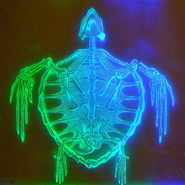 "Light Art: ""Caretta Caretta"""