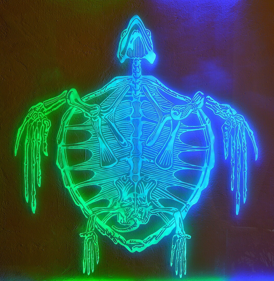 """Caretta Caretta"" by Leo Jahaan. LED Light and Sand-Blasted Plexiglass, 2014. 100 cm x 120 cm."