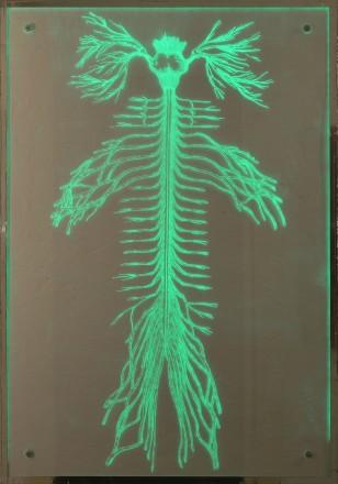 Leo Jahaan - Indirect Realism (Green)