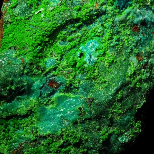Botryoidal Conichalcite