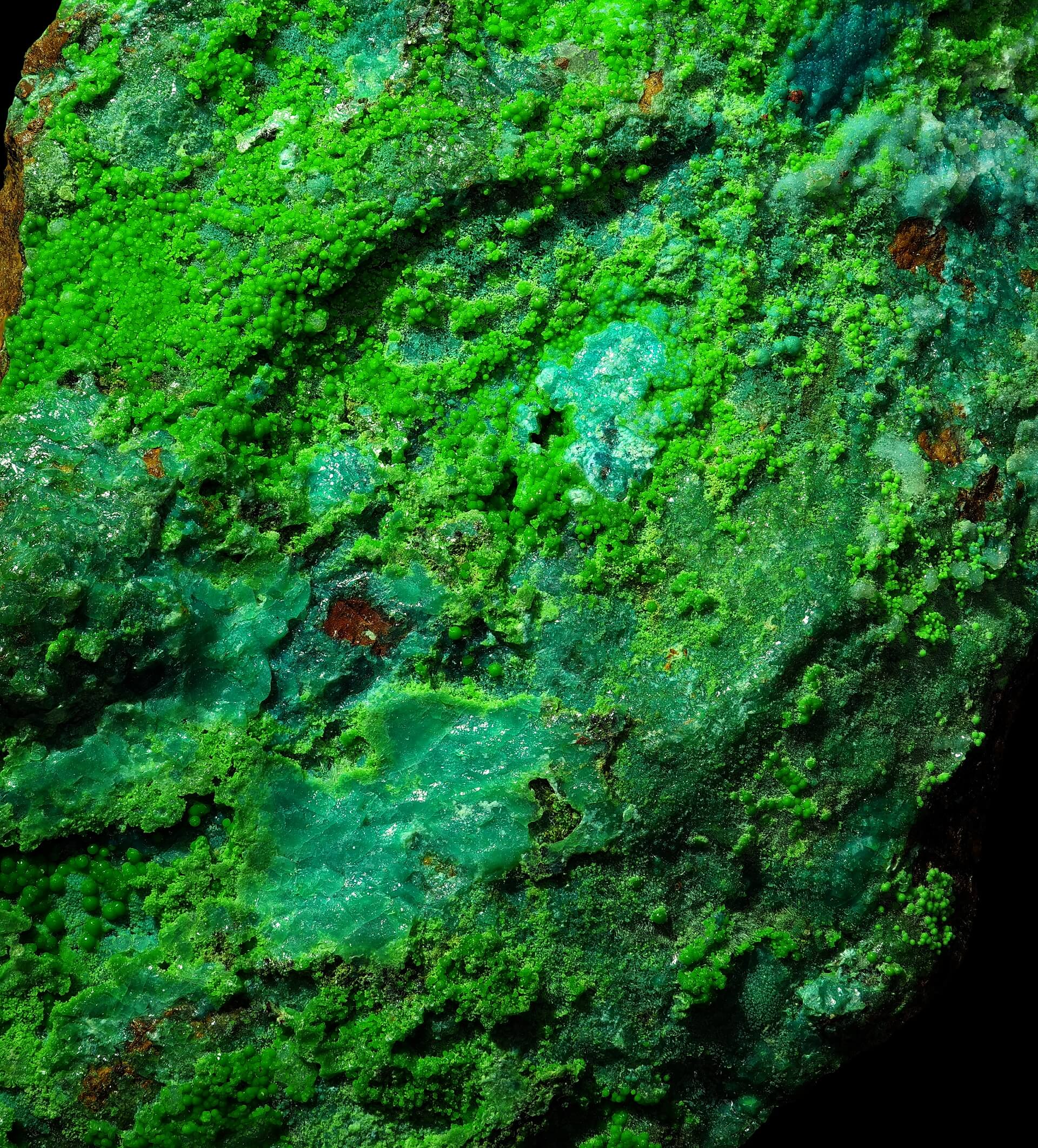 Rich green Conichalcite balls almost completely cover a reddish Cuprite matrix, with minor flat Chrysocolla patches. Small areas of fibrous Mixite are also present.