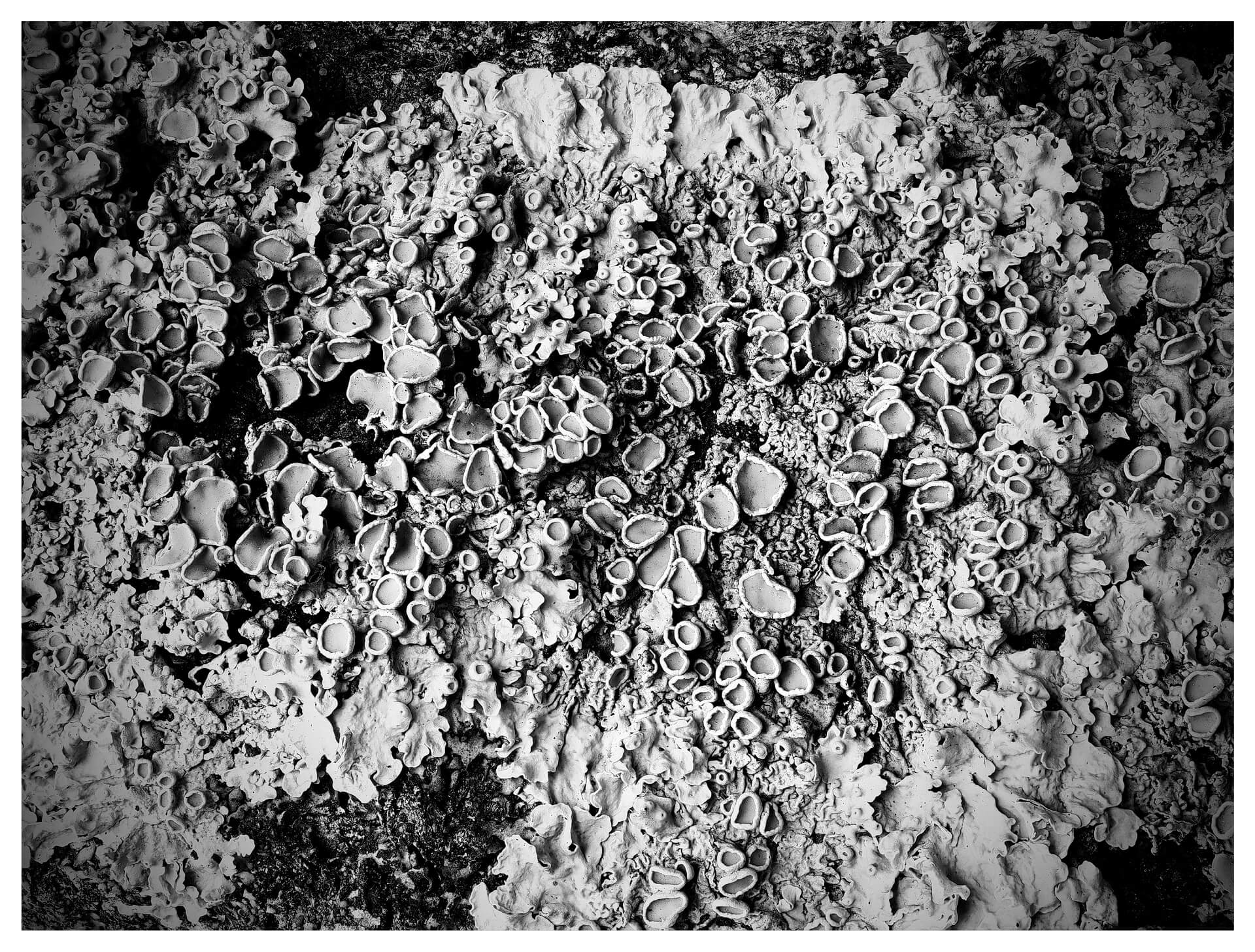 Lichen (in black and white)