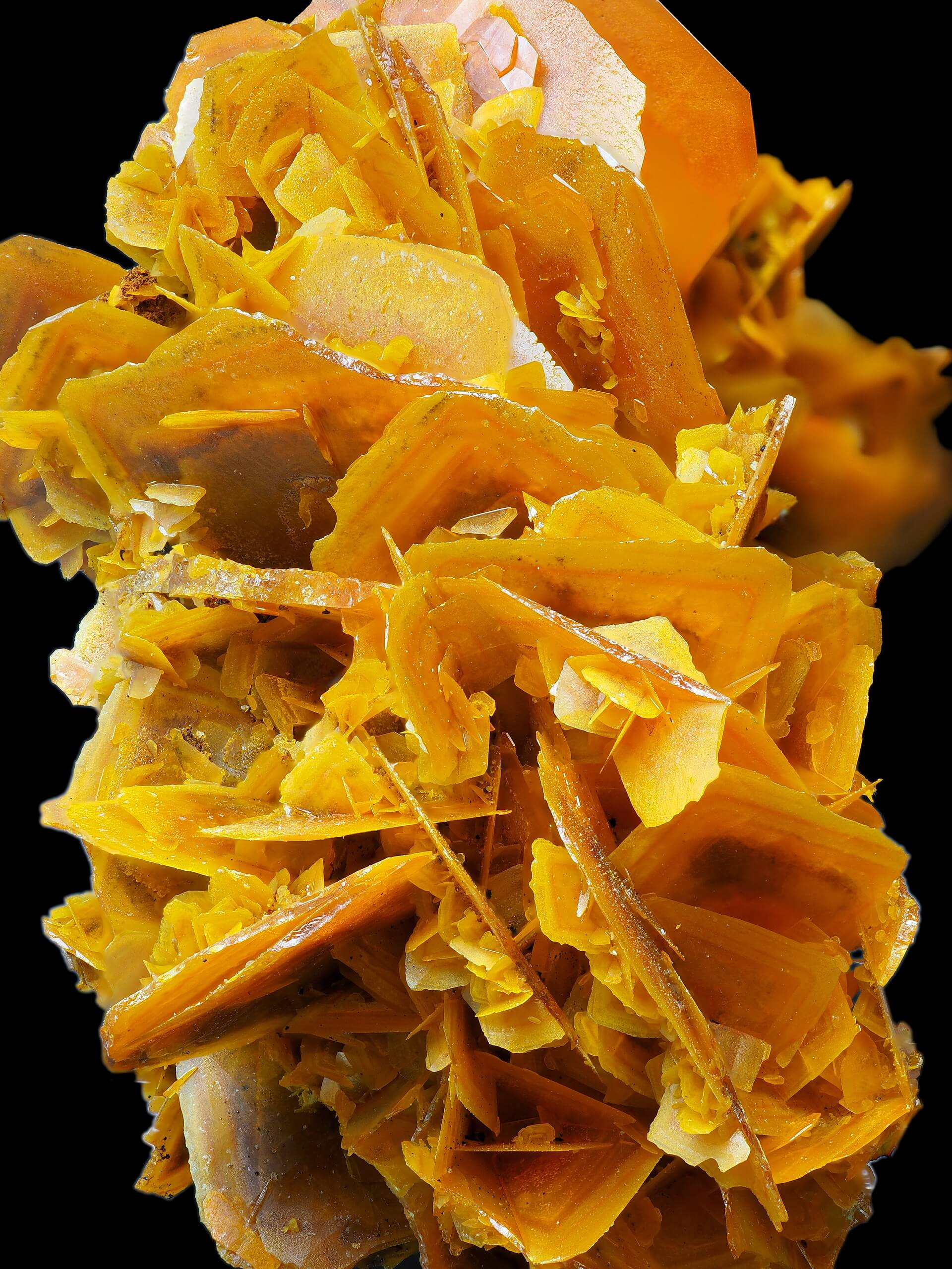 Long cluster of bright orange Wulfenite blades intersecting.