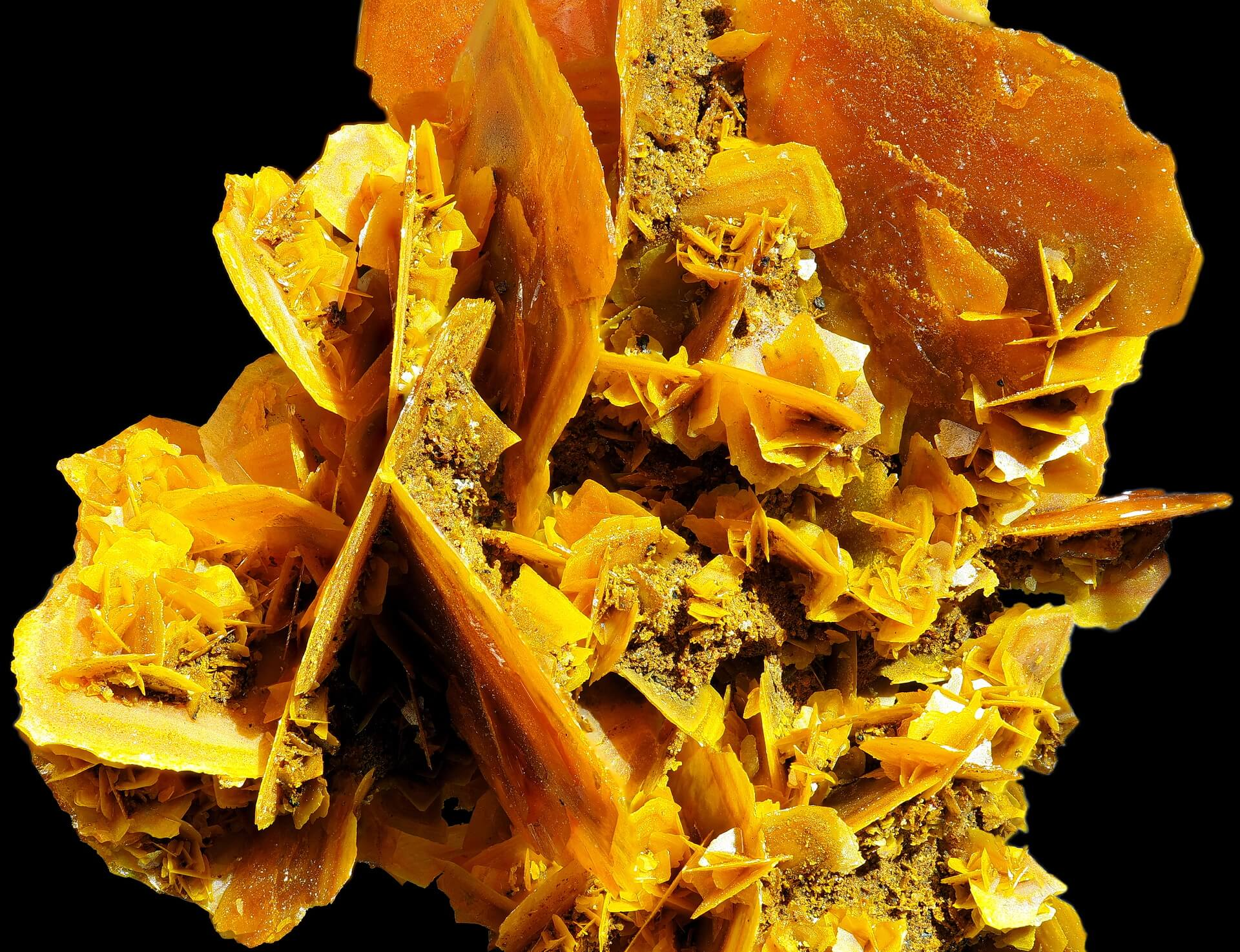 Macro view of a jumble of large and very small Wulfenite blades.